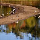 Laratinga Wetlands I by gypsygirl