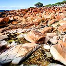 Rocky Beach by Scott H Murray