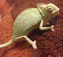 chameleon by omfgitsjaime