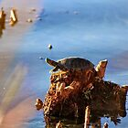 Turtle by Laurie Puglia