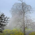 Castle Campbell in the fog by 242Digital
