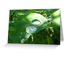 Nature's Magnifying Glass Greeting Card