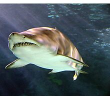 Shark in Motion Photographic Print