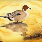 Pintail Duck by Diane Hall