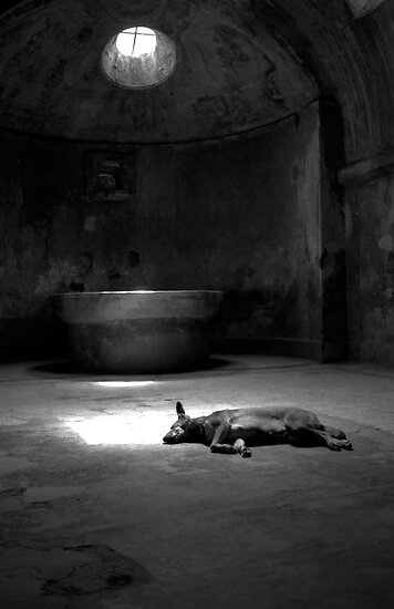 Sleeping Dog at Pompeii by Celia Bell