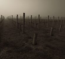 Misty Wine by Mike Emmett