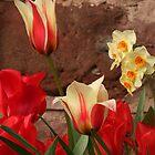 Tulips by Sue Hammond