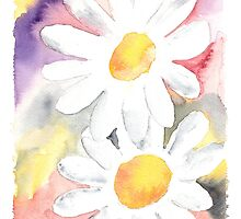 2 Daisies by derekmccrea