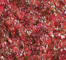 Wall Of Red by Martha Medford