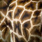 tessellate by Rob Corbett
