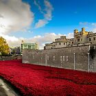 Tower Of London Poppies by StephenRphoto