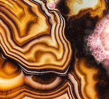 Pink Brown Turritella Agate Pattern by MMPhotographyUK