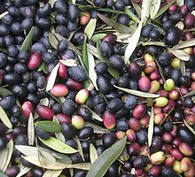 Fresh Olives by Melissa Purves