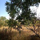 Tree and High Grass by Barbara Wyeth