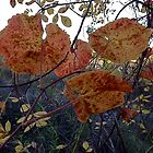 Speckled Fall Leaves by Barbara Wyeth