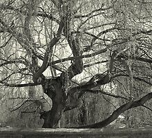 Weeping Willow of Eaton by funkyshazz
