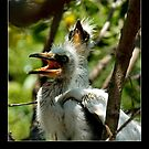 Egret Chicks - Cool Stuff by Maria A. Barnowl