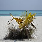 Baby Palm tree by simonj