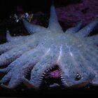 Star Fish by cfam