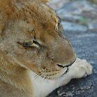 Achilles the Lion  by Victoria  Morgan