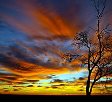 Mallee Scapes by Matt Harvey