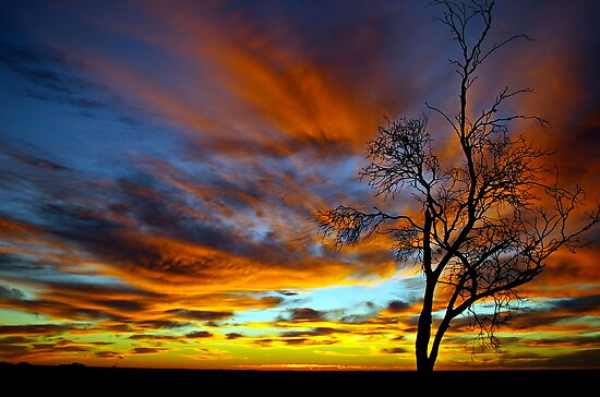 Australian Sunrise by Matt Harvey