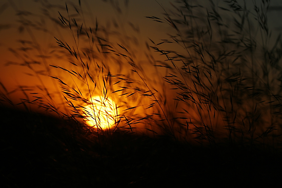 Free State Sunset - Petrusburg, South-Africa  by Qnita
