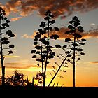 """Garingbome"" Silhouette... The Sisal Plant (Captured from my backyard) by Qnita"