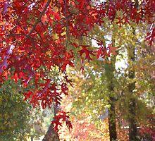 Autumn Leaves IV by gypsygirl