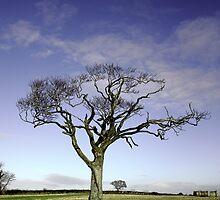 The Rihanna Tree Wilting by Wrayzo