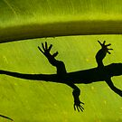 Lizard silhouette by Sheila  Smart