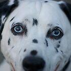 Lucky Dog by DavidBerry