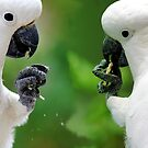 Sulphur crested cockatoos having a snack by Sheila  Smart