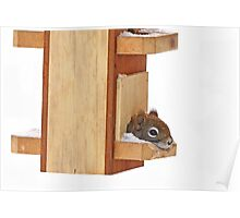 Anyplace is home when its cold - Red Squirrel Poster
