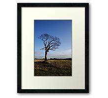 The Rihanna Tree, Alive! Framed Print