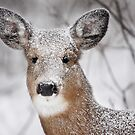 I hate snow! - White-tailed Deer by Jim Cumming