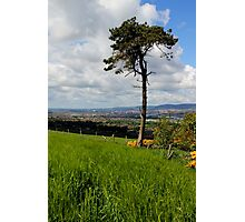 A Tree With A View Photographic Print