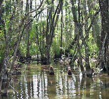 Florida Everglades by philwells