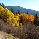 Autumn's Glory - Luther Pass, Alpine County, CA by Rebel Kreklow