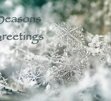 Seasons Greetings by Darren Fisher