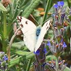 Butterfly in Lavender by HolidayMurcia