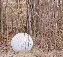 Alone In The Woods by Elizabeth  Lilja