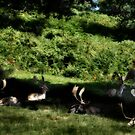Fallow in the shadows by missmoneypenny