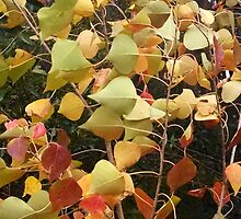 Wind through the Bradford Pear tree leaves by Nadia Korths