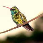 Humming Bird: Profile by tonyphoto