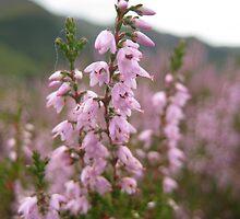 Scottish Blossom by Edward Gunn