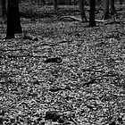 Dark woodland floor. by maxxx