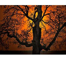 The Glow and Old Oak Photographic Print