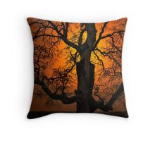 The Glow and Old Oak Throw Pillow