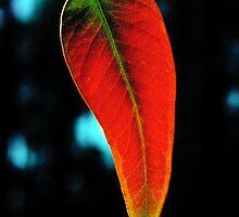 Gum Leaf by Ern Mainka
